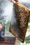 Imker, der Bienenstock prüft lizenzfreies stockfoto