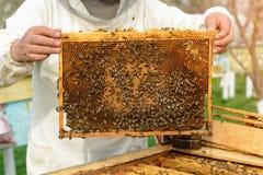 Imker, der eine Bienenwabe voll von den Bienen hält Imker in der schützenden Arbeitskleidung, die Bienenwabenrahmen am Bienenhaus lizenzfreies stockfoto