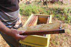 Imker, der einen Rahmen der Bienenwabe hält Lizenzfreies Stockfoto