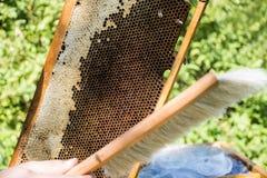 Imker, der frische goldene Honigbienen gesund macht lizenzfreies stockbild