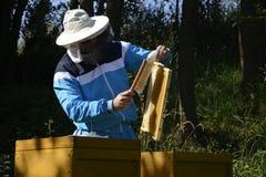 Imker, der frische goldene Honigbienen gesund macht lizenzfreies stockfoto