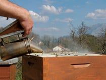 Imker, der mit Biene arbeitet Stockfotos