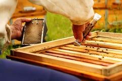 Imker, der mit Bienen unter Verwendung des Imkereivorrates arbeitet Stockfoto