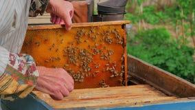 Imker, der mit Bienenwaben arbeitet stock video footage