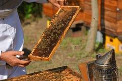 Imker, der Rahmen der Bienenwabe mit Arbeitsbienen hält Lizenzfreie Stockbilder