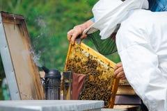 Imker, der Rahmen der Bienenwabe mit Arbeitsbienen im Freien hält Lizenzfreie Stockbilder