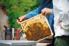Imker, der Rahmen der Bienenwabe mit Arbeitsbienen im Freien hält Lizenzfreies Stockfoto
