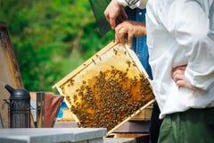 Imker, der Rahmen der Bienenwabe mit Arbeitsbienen im Freien hält Stockbild