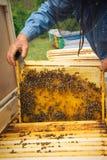 Imker, der Rahmen der Bienenwabe mit Arbeitsbienen im Freien hält Stockbilder