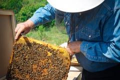 Imker, der Rahmen der Bienenwabe mit Arbeitsbienen im Freien hält Stockfoto