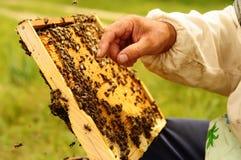 Imker, der Rahmen der Bienenwabe mit Bienen hält Stockfotos