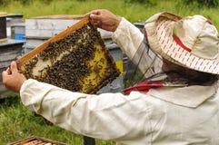 Imker, der Rahmen der Bienenwabe mit Bienen hält Stockbilder