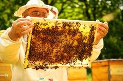 Imker, der Rahmen der Bienenwabe mit Bienen hält Stockbild
