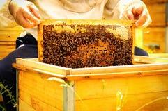 Imker, der Rahmen der Bienenwabe mit Bienen hält Lizenzfreies Stockfoto