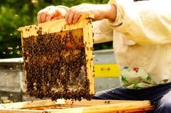 Imker, der Rahmen der Bienenwabe mit Bienen hält Lizenzfreie Stockfotografie