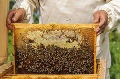 Imker, der Rahmen der Bienenwabe mit Bienen hält Lizenzfreie Stockfotos