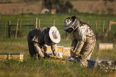 Imker, die Bienenbienenstöcke überprüfen Stockbild