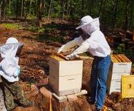 Imker, die Bienenstock neigen Stockfoto