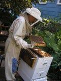 Imker die Bijenkorf controleert Stock Afbeelding