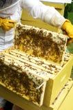 Imker die bijenkorf neigt Royalty-vrije Stock Afbeeldingen
