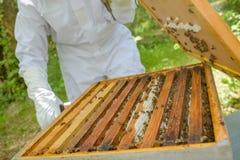 Imker die deksel verwijderen uit bijenkorf stock fotografie