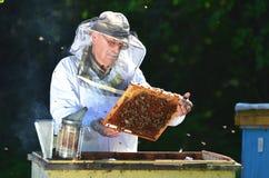 Imker die inspectie in bijenstal maken Stock Foto's