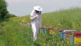 Imker die zijn bijenkorven inspecteren stock footage