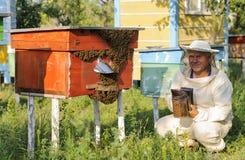 Imker kontrolliert den Bienenhausbienenstock von Bienen Lizenzfreies Stockfoto
