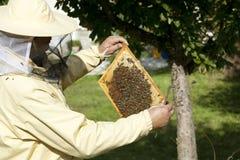 Imker kontrollierter Bienenstock lizenzfreie stockfotos