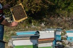 Imker met de bijenkorf royalty-vrije stock foto