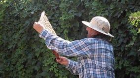 Imker mit Bienen stock footage