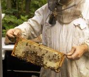 Imker mit Bienenwabe Stockbild