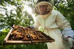 Imker mit einem Rahmen voll von den Bienen Stockbild