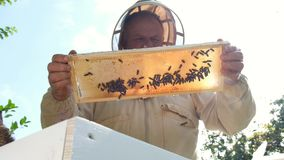 Imker op bijenstal De imker werkt met bijen en bijenkorven aan de bijenstal stock video