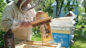 Imker op bijenstal De imker werkt met bijen en bijenkorven aan de bijenstal stock footage