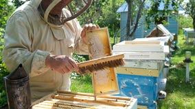 Imker op bijenstal De imker werkt met bijen en bijenkorven aan de bijenstal stock videobeelden