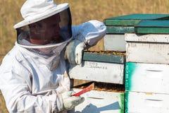 Imker Opening ein Bienenstock Stockfotografie