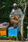 Imker rüttelt Paketschwarm von Bienen im blauen Bienenstock - Detail lizenzfreies stockbild