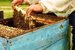 Imker in seinem Bienenhaus mit Bienen Stockbild