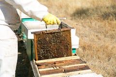 Imker werkende bijenkorven Stock Afbeeldingen
