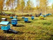 Imkerei von Altai Stockbild