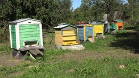 Imkereibienenhaus Bunte Bienenbienenstöcke im Dorfgarten 4K stock video