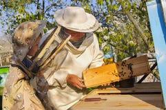 Imkergroßvater und -enkel überprüfen einen Bienenstock von Bienen Stockfotografie