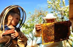 Imkergroßvater und -enkel überprüfen einen Bienenstock von Bienen Lizenzfreies Stockbild