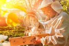 Imkergroßvater und -enkel überprüfen einen Bienenstock von Bienen Stockfotos
