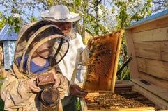 Imkergroßvater und -enkel überprüfen einen Bienenstock von Bienen Lizenzfreies Stockfoto