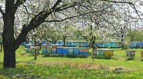 Imkerij, bijen en bijenkorven stock foto's
