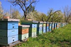 Imkerij, bijen en bijenkorven Royalty-vrije Stock Foto