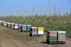Imkerij in moderne appelboomgaard stock fotografie