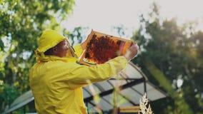 Imkermann, der Holzrahmen überprüft, bevor Honig im Bienenhaus geerntet wird Lizenzfreies Stockbild